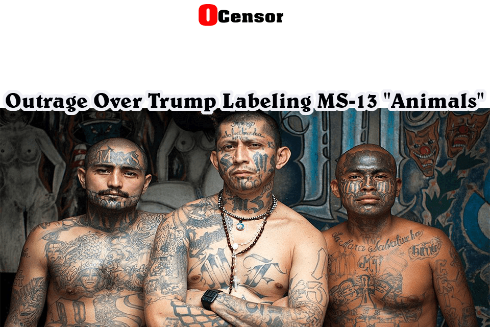 "Outrage Over Trump Labeling MS-13 ""Animals"""