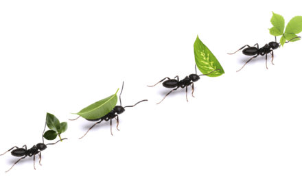The Coronavirus, Ants, and Our Hard Right-Wing Reality